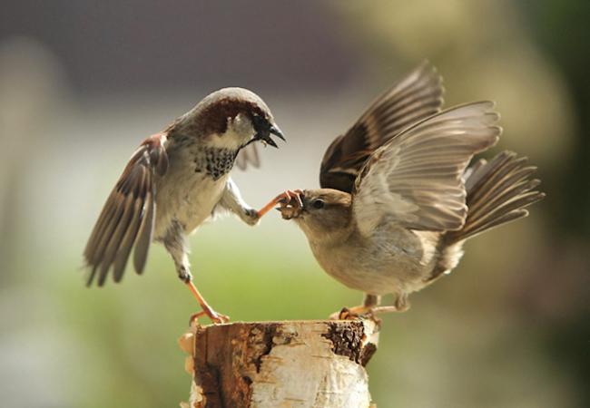 focus-photo-prise-au-bon-moment-oiseaux