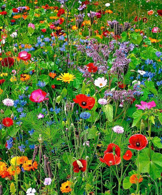 inspiration-photo-jardin-Pin-149252175128034299