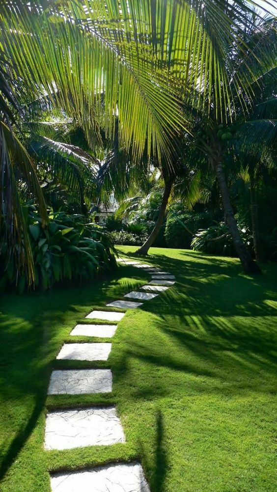 inspiration-photo-jardin-Pin-317714948692215608