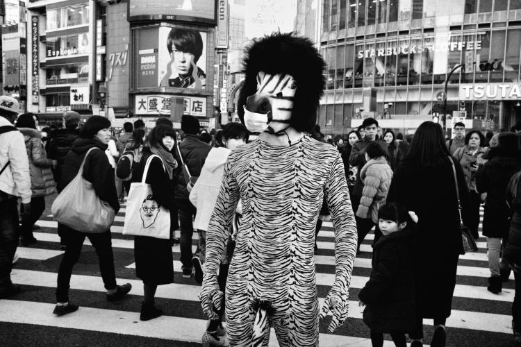 photographe-tatsuo-suzuki